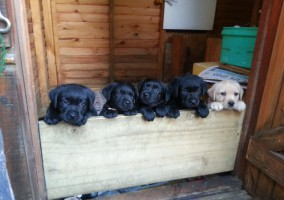 Pups looking out - 6 weeks